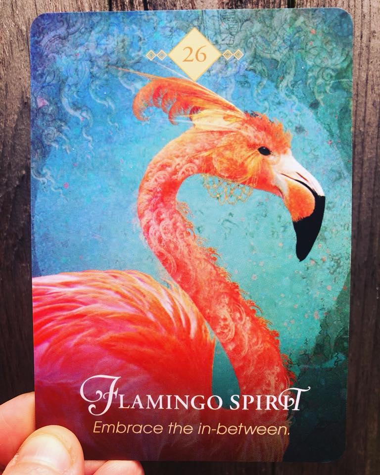 Flamingo Totem Meaning (Spirit Animal)