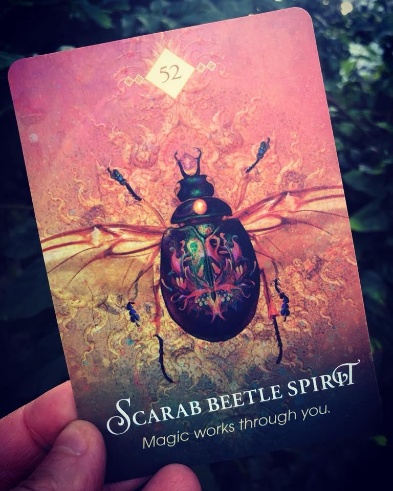 Scarab Beetle Totem Meaning (Spirit Animal)