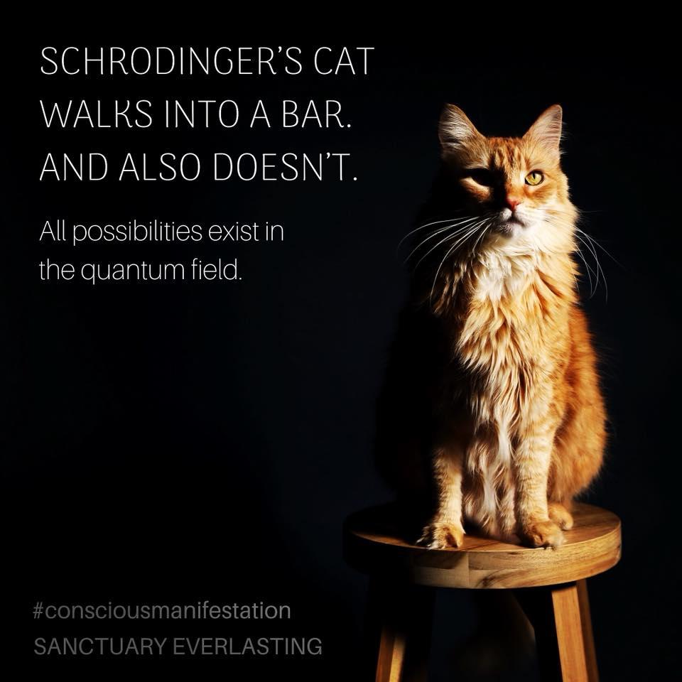 Schrodinger's Cat: Open Mind Meditation