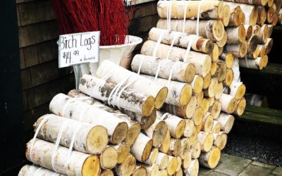 Birch Tree Meaning and Magick