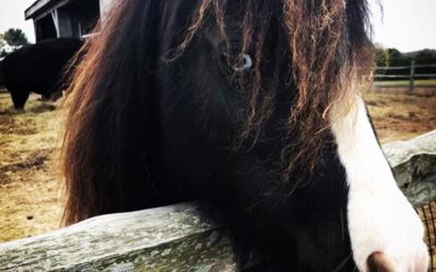 Horse Totem Meaning (Spirit Animal)